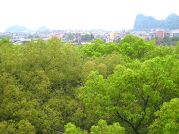 Guilin, China (photo by Mark Pegrum, April 2014)